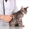 Ветеринарные клиники в Прокопьевске